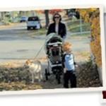 dog_walks